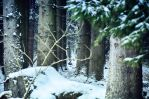 Wintery Woods by BrocX