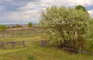 Old fence and a tree by Korolevatumana