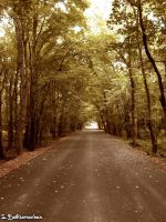 Wooded Road by livelysmile
