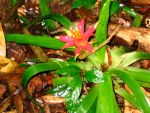 Bromeliad by IlovetheCasualties