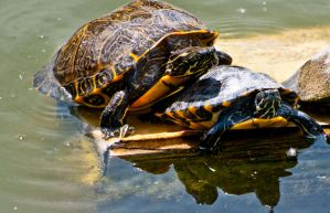 Turtles In The Sun by terryrunion