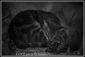 Love knows no boundaries by PutYourBraveFaceOn