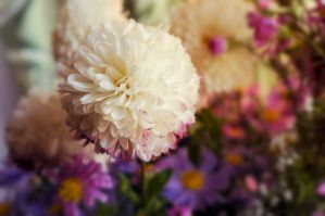 background of flowers by Tumana-stock