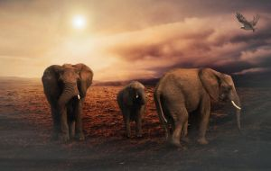 Elephants by mindym306
