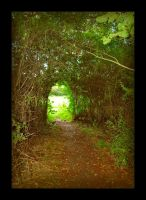 The Way Out of the Woods by Forestina-Fotos