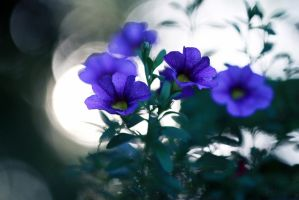 Bleu by By-who-photography