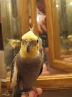 Maui in the Mirror 2 by Windthin
