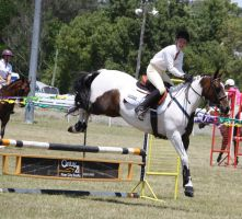 STOCK Showjumping 390 by aussiegal7