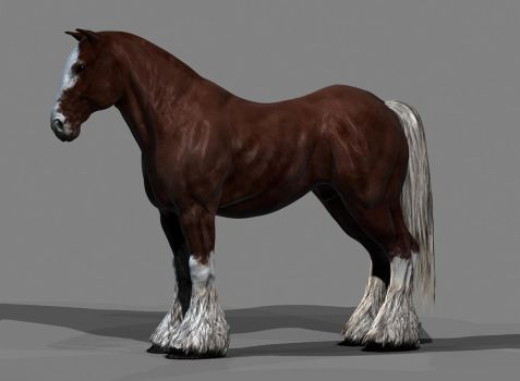 Horse by mojette