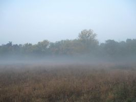 foggy field stock 7 by EveBlackwoodStock