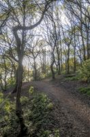 Woodland Path - HDR by teslaextreme