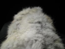 Rabbit Fur 36 by TRANS4MATICA
