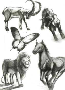 Charcoal Studies - Animals by Rocklaw