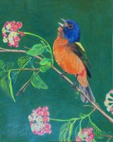 Painted Bunting In Summer by KW-Scott