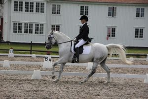Dressage 5 by Chance-STOCK