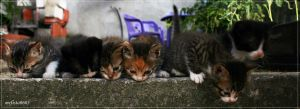 cat panorama :P by mefisto0603