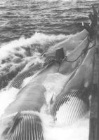Whalers: transporting nuance. by addicted2