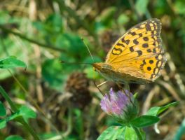Yellow Butterfly 3 by Scorpini-Stock