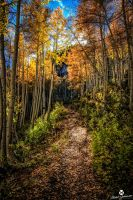 The Golden Leaf Trail by mjohanson