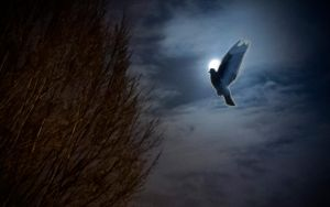Pigeon At Full Moon Backlit by TheBigDaveC