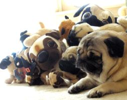 Pug Plushies by puggers