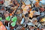 Frost on leaves by eswendel
