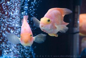Fun Fishies at ProPhoto Expo by photoscot