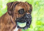 Playful Boxer by GeorgeArt23