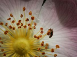 Wow...what a huge flower! by clochartist-photo
