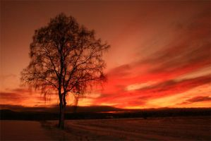 sunset tree by dif89
