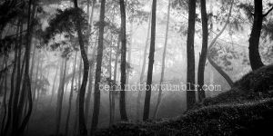my other gallery sites. by iendrakurniawan