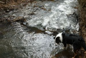 Rosco at the Creek: Looking Down by the-only-nighthawk