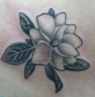 Magnolia black and grey by Dreekzilla