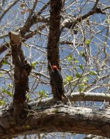woodpecker by agent229