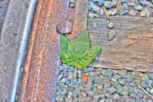 Leaf on the Tracks by RavenA938