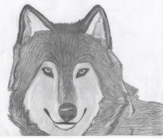 Wolf... by Mitchthefoxcatwolf