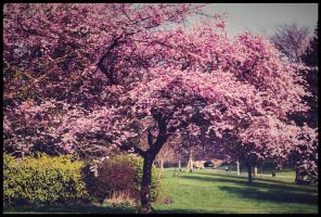 Spring Tree! by pushparaj