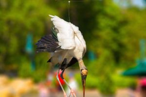 Stork caught in a wire by Opium4TmassS
