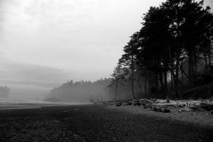 Winter on Ruby Beach by deeceemarie