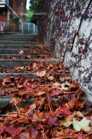 Late autumn leaves II by SilvieTepes