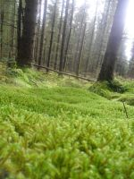Moss on the forest floor by SmwtPhotography