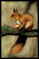 European Red Squirrel by solarith