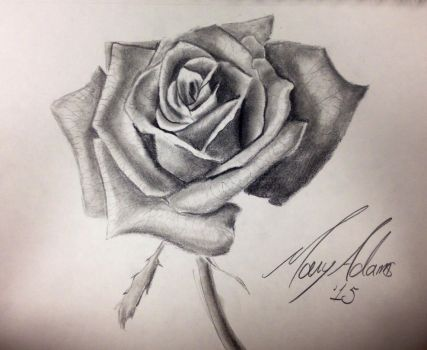 Rose Drawing by leathercraft1990