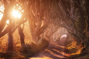 The Dark Hedges I by Matthias-Haker