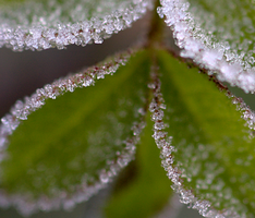 Frosty morning 4 by bmh1