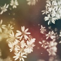 summer snowflakes by purp0l