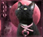 Coco by boodie