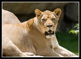 Fierceness by tleach0608