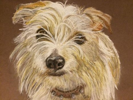 Lucy the Jack Russell/Norfolk Terrier Cross by saddlers