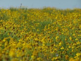 Sea of Gold by GRM327